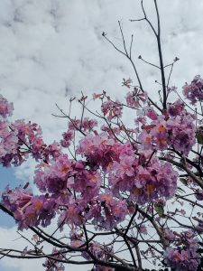 Flora Austrálie