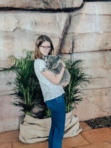 Koala hug, Australia